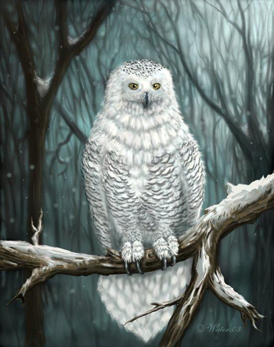 Image animaux surprenante - Animaux de blanche neige ...